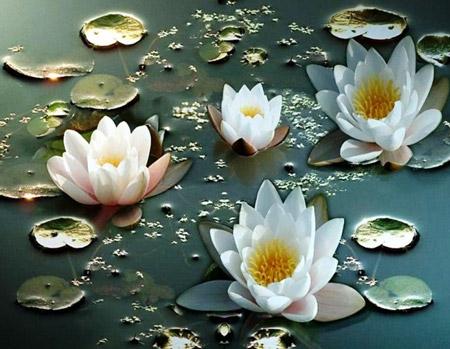 flora delta del danubio