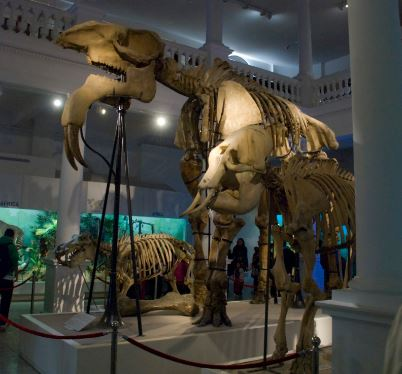 museo historia natural bucarest